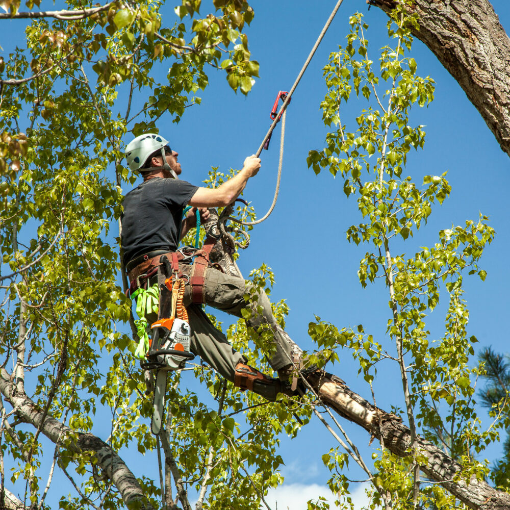 How to become a Tree Surgeon